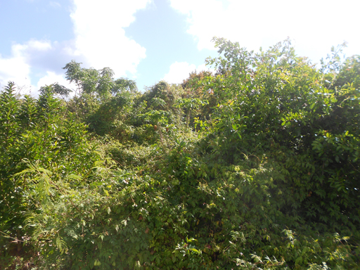 Additional photo for property listing at Tanglewood Estate Lot 4 Tanglewood Road   Paget Parish, PG03 Bermuda